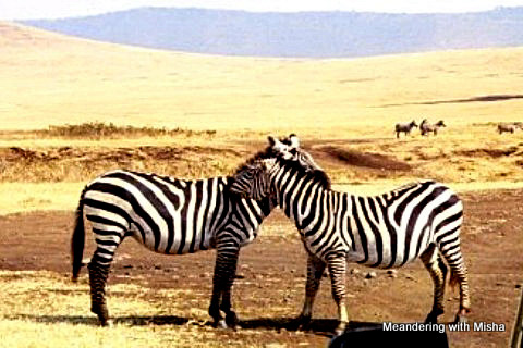 Friends in the Ngorongoro Crater
