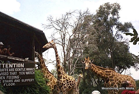 The Giraffe Center