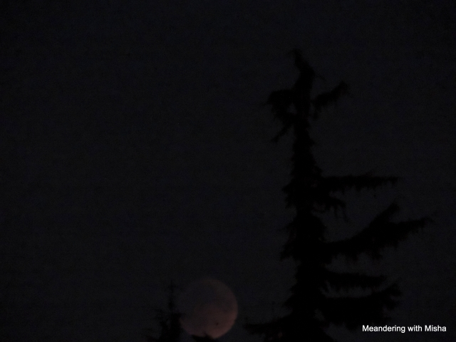 The moon, in total eclipse, finally makes an appearance about 7:48 pm over the rooftops